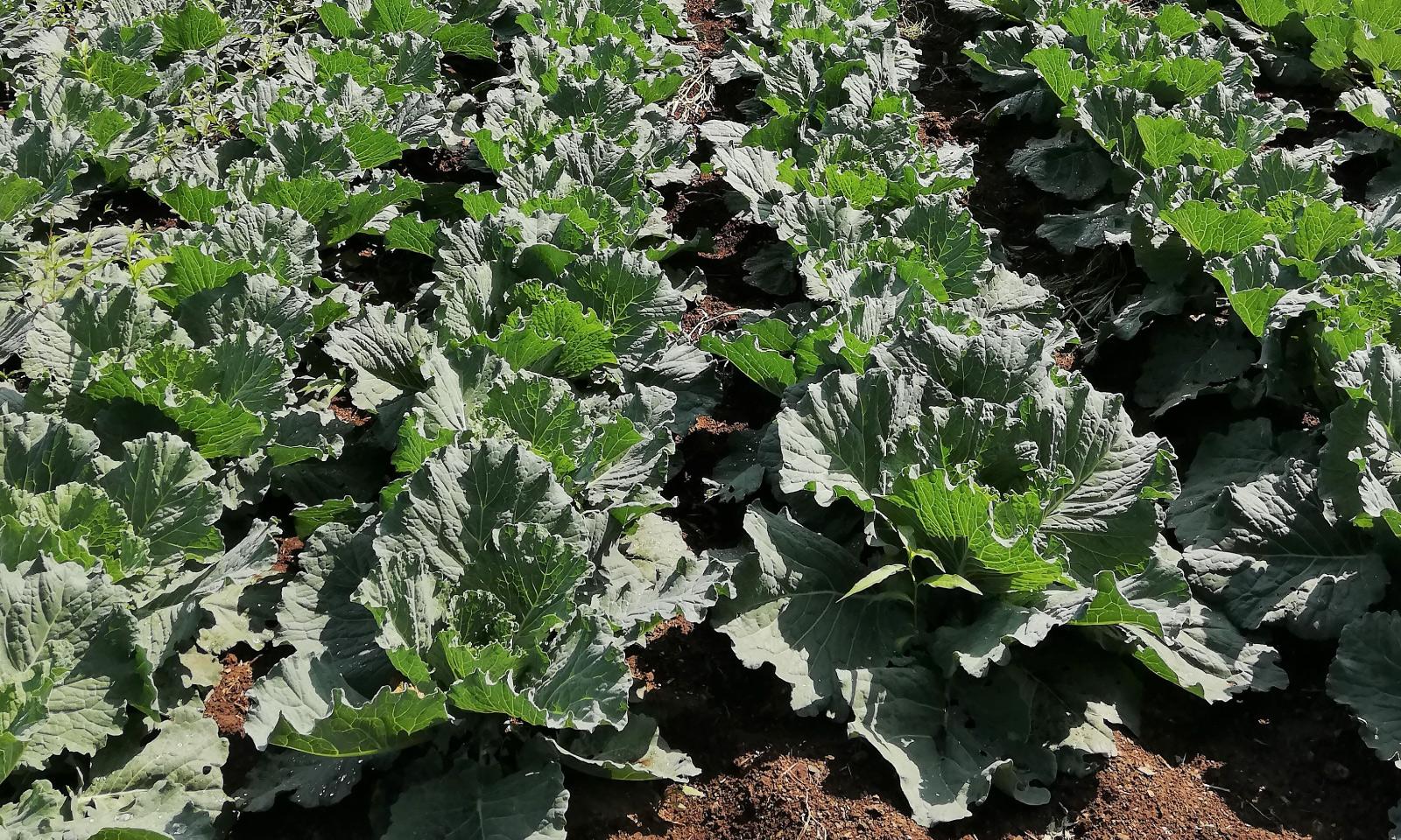 producción de cultivos alimentarios galicia