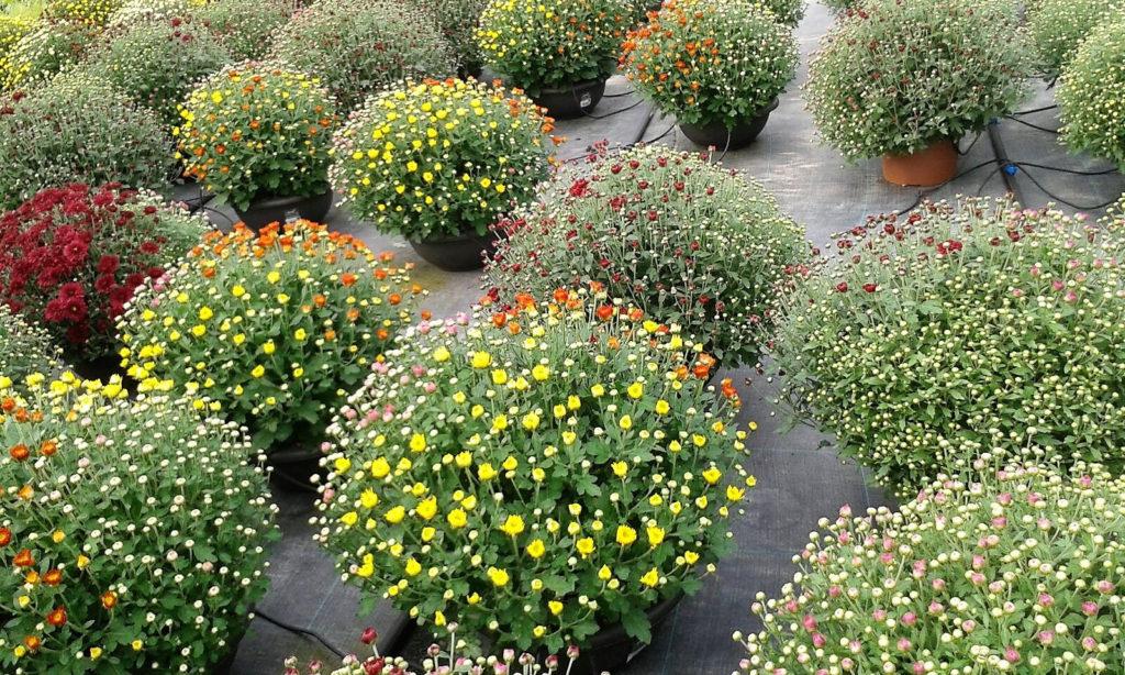 producción de cultivos ornamentales en galicia